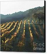 California Vineyard Series Wine Country Canvas Print