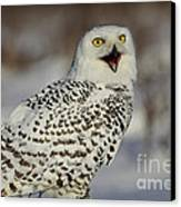 Call Of The North - Snowy Owl Canvas Print by Inspired Nature Photography Fine Art Photography