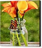 Calla's And The Butterfly Canvas Print by Darren Fisher