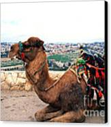 Camel And Jerusalem From Mount Olive Canvas Print by Thomas R Fletcher