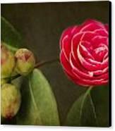 Camellia Canvas Print by Rebecca Cozart
