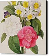 Camellias Narcissus And Pansies Canvas Print by Pierre Joseph Redoute
