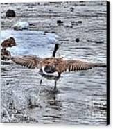 Canada Goose - The Runway Canvas Print by Skye Ryan-Evans