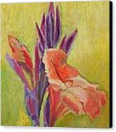 Canna Lily Canvas Print by Janet Ashworth