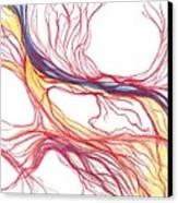 Capillaries Canvas Print