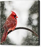 Cardinal In Snow Canvas Print by Jinx Farmer