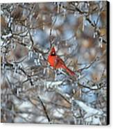 Cardinal In Winter Canvas Print by Cim Paddock