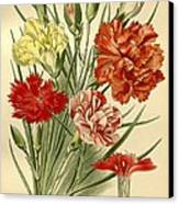 Carnations Canvas Print by Philip Ralley