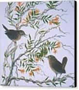Carolina Wren And Jasmine Canvas Print by Ben Kiger
