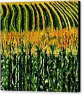 Cash Crop Corn Canvas Print
