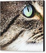 Cat Art - Looking For You Canvas Print