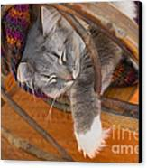 Cat Asleep In A Wooden Rocking Chair Canvas Print