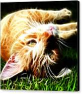 Cat At Play Canvas Print by Jo Collins