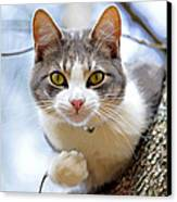 Cat In A Tree Canvas Print