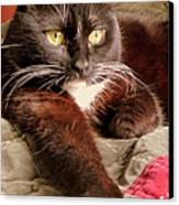 Cat On Velvet Canvas Print by Maria Scarfone