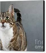Cat Portrait Canvas Print by Nailia Schwarz