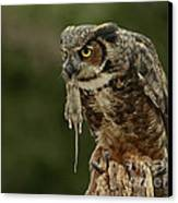 Catch Of The Day - Great Horned Owl  Canvas Print by Inspired Nature Photography Fine Art Photography