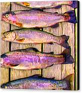 Catch Of The Day - Painterly - V1 Canvas Print