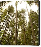 Cathedral Forest Canvas Print