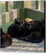 Cats 62 Canvas Print by Joyce StJames