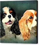 Cavalier King Charles Canvas Print by Diana Angstadt