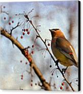 Cedar Waxwing And Berries Canvas Print