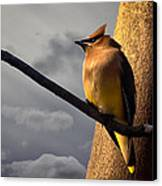 Cedar Waxwing Canvas Print by Bob Orsillo