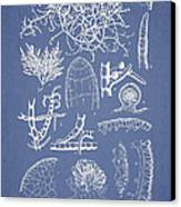 Champia Parvula Canvas Print by Aged Pixel