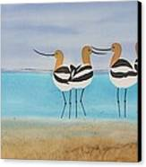 Chance Encounter At The Beach Canvas Print by Carolyn Doe