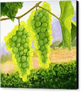 Chardonnay Grapes Canvas Print by Mike Robles