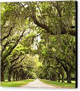 Charleston Avenue Of Oaks Canvas Print by Stephanie McDowell