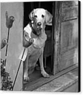 Charleston Shop Dog In Black And White Canvas Print by Suzanne Gaff