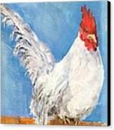 Cheeky Cock Canvas Print by David  Hawkins