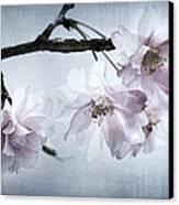 Cherry Blossom Sweetness Canvas Print