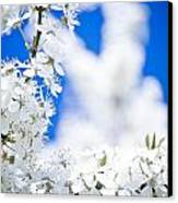 Cherry Blossom With Blue Sky Canvas Print
