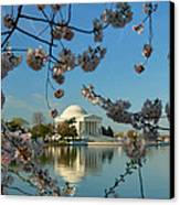 Cherry Blossoms 2013 - 039 Canvas Print