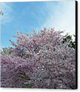 Cherry Blossoms 2013 - 070 Canvas Print by Metro DC Photography