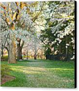 Cherry Blossoms 2013 - 075 Canvas Print by Metro DC Photography