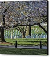 Cherry Blossoms Adorn Arlington National Cemetery Canvas Print