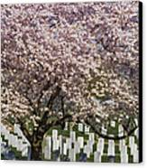 Cherry Blossoms Grace Arlington National Cemetery Canvas Print by Susan Candelario