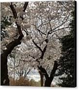 Cherry Blossoms - Washington Dc - 011373 Canvas Print by DC Photographer