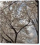 Cherry Blossoms - Washington Dc - 011375 Canvas Print by DC Photographer