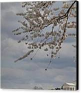 Cherry Blossoms With Jefferson Memorial - Washington Dc - 011312 Canvas Print by DC Photographer