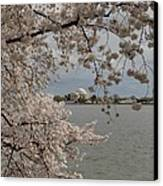 Cherry Blossoms With Jefferson Memorial - Washington Dc - 011320 Canvas Print by DC Photographer