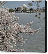 Cherry Blossoms With Jefferson Memorial - Washington Dc - 011321 Canvas Print by DC Photographer