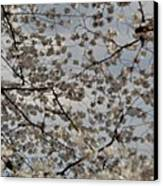 Cherry Blossoms With Jefferson Memorial - Washington Dc - 011330 Canvas Print by DC Photographer