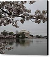 Cherry Blossoms With Jefferson Memorial - Washington Dc - 011343 Canvas Print by DC Photographer