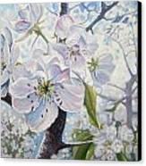 Cherry In Blossom Canvas Print by Andrei Attila Mezei