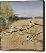 Chickadees And A Row Of Birch Trees Canvas Print by Carolyn Doe