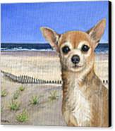 Chihuahua At Sea Isle City New Jersey Canvas Print by Peggy Dreher